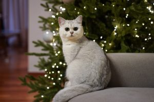 The Holidays and the Potential Pet Hazards